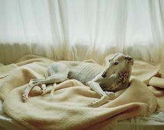 Martin_usborne_spanish_hunting_dogs_it's_nice_that_3