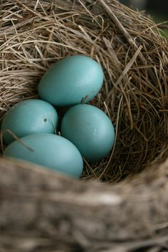 Identifying backyard bird eggs - San Francisco wildlife | Examiner.com