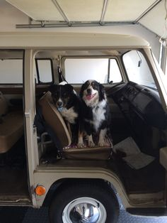 The dogs call shotgun!  Best seat in the house with a great view.