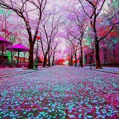 Tokyo Japan ____________________________________________ Photo courtesy of Loving this photo currently of the cherry blossom trees in Tokyo. Tag someone you'd take a walk down this road with. Wonderful Places, Beautiful Places, Beautiful Pictures, Beautiful Scenery, Simply Beautiful, Beautiful Artwork, Beautiful Landscapes, Beautiful Flowers, Japan Tag