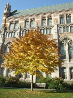 Suzzallo Library in the fall. #youW Photo by Yu Lin