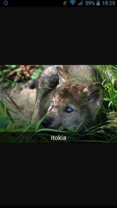 Itokia
