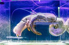 Photo review of the Mote Marine Laboratory and Aquarium in Sarasota, Florida, USA