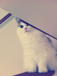 =3 By CyberDezdemona http://cmji.me/14M9XVk #cat #aww #beauty