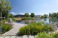 Парк с пляжем_Deichgärten and Donaupark by Landschaftsarchitekten Creative Landscape, Park Landscape, Landscape Plans, Contemporary Landscape, Urban Landscape, Landscape Architecture, Landscape Design, Landscape Engineer, Wetland Park