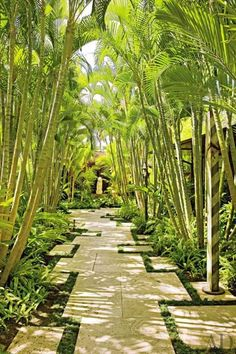 Wonderful Tropical Garden Pathway Landscape - Looking for a Various Garden Pathway Landscape Tropical Landscaping, Modern Landscaping, Garden Landscaping, Landscaping Ideas, Tropical Gardens, Landscaping Software, Hawaiian Gardens, Landscaping Contractors, Modern Backyard