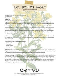 Herbarium: St. John's Wort. Magical and Medicinal uses of St. John's Wort. Includes free BOS page!