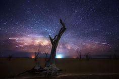 arbre-nuit-etoilee