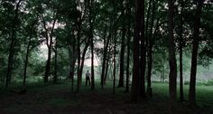 terrence malick tree of life - Google Search
