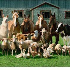 .family photo time down on the farm