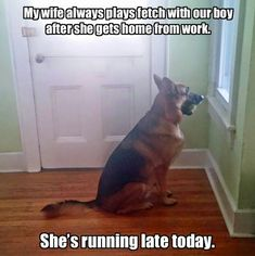 Picture tells the story ♥ Cute Funny Animals, Funny Dogs, All Dogs, Dogs And Puppies, Doggies, I Love Dogs, Cute Puppies, Cute Dogs, German Shepherds