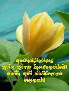 Good Morning Greetings, Say Hi, Happy Monday, Good Day, Plants, Flowers, Nice, Woman, Beautiful