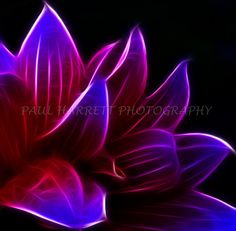 "Flower Photography - Photo Art - Fine Art Photography - Wall Art Deco - Fractal Abtract-flower- 12 X 12""  Kodak E Surface paper on Etsy, $39.00"