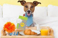 jack russelel honden afbeeldingen | Notícias sobre Gatos | EXAME.com - Negócios, economia, tecnologia e ...