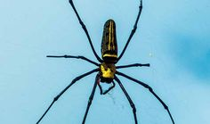 Repelente para arañas de menta - Trucos de hogar caseros