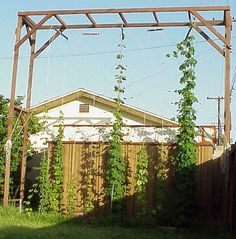 The method you use to construct your trellis is obviously based on how you plan your hop garden layout. I was at an obvious advantage when constructing my trellis, as I already had a steel buildin…