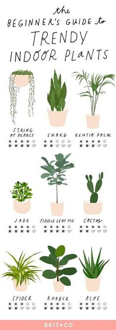 Keep your indoor plants strong + healthy with this simple beginner's guide to trendy indoor plants. ideas Keep your indoor plants strong + healthy with this simple beginner's guide to trendy indoor plants. Kentia Palm, Plantas Indoor, Decoration Plante, Green Decoration, Home Decoration, Art Decor, Walled Garden, Plantation, Garden Plants