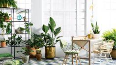 6 plantas de interior resistentes al frío y al calor - https://decoracion2.com/6-plantas-de-interior-resistentes-al-frio-al-calor/ #Decorar_Con_Plantas, #Plantas_De_Interior, #Plantas_Resistentes