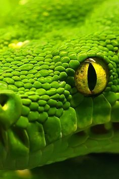 Green Snake  http://www.arcreactions.com/transparent-plastic-business-cards-2/