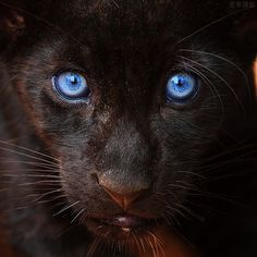 piercingly blue eyes!