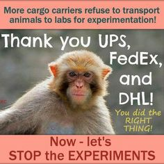 kawaii-five-oh: clanarmstrong: More CARGO CARRIERS refuse to transport animals to labs for experimentation! GREAT NEWS ! Keep signing petitions folks - it does help ♥ Stop Animal Testing, Stop Animal Cruelty, Faith In Humanity, Animal Welfare, Animal Rights, Pet Care, Animal Rescue, Adoption, Creatures