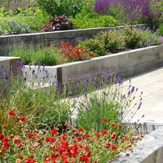 raised railway sleepers 52 Best IdeasGarden design raised railway sleepers 52 Best Ideas grånat byggtimmer i ek, terrassering med växter mellan. Growing Asters: Planting & Caring for These Fall Flowers Garden Spaces, Raised Garden, Sloped Garden, Plants, Contemporary Garden, Country Gardening, Garden Ideas Budget Backyard, Country Garden Design, Natural Landscaping