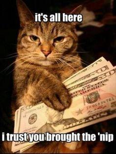 cat wants cat nip