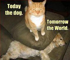 明日は世界を。