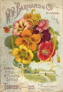 Gorgeous Flowers - Vintage Ephemera: Barnard & Co. Seed Catalog, 1896 .... http://vintageephemera.blogspot.com/2012/03/barnard-co-seed-catalog-1896.html#