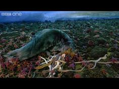 beautiful and disgusting timelapse of three-foot nemertean worms and sea stars eating dead things in the Antarctic.