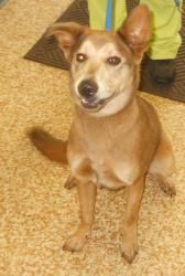 CHASITY is an adoptable Husky Dog in Lima, OH.  ...