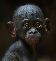 So precious ✨ Lemur, Orangutan, Primates, Beautiful Babies, Monkeys, Animals, Sweet, Baby, Pictures