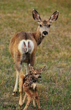 Familia Bambi