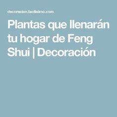 Plantas que llenarán tu hogar de Feng Shui | Decoración