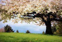 Amazing Spring Scenes