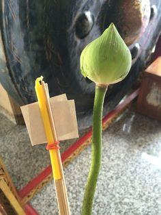 参拝セット  蓮の花、御線香、ロウソク、金箔