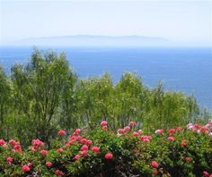 view from wayfarers chapel in rancho palos verses. With view of Catalina Island Wayfarers Chapel, Let's Get Married, City Of Angels, California Dreamin', Beautiful Places, Beautiful People, Trip Advisor, Island, Verses