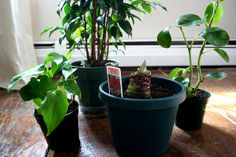 House Plants by weebum, via Flickr