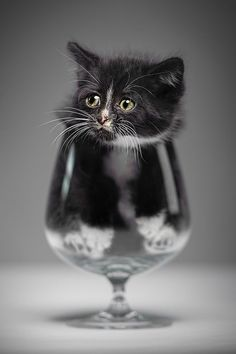 \ I iz notz a fish or any liquid fur dat matter. Getz me out ! NOWZ ! \