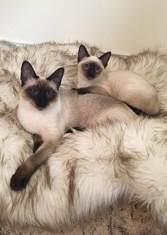 Mama and precious kitty baby.