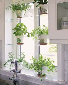 glass shelves, white pots