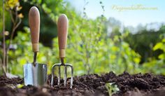 Back To Eden~ How To Start A Sustainable Garden