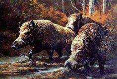 狩猟をしていた男性(70歳)、イノシシに突進され、ともに崖から転落するも体勢立て直し射殺!