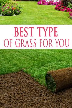 DIY Home Decor Ideas : Illustration Description If you've ever seeded a new lawn or purchased sod, you'll quickly learn that not all grass is created equal. To get the beautiful, lush, (and green) … Grass Seed Types, Best Grass Seed Lawn, Lawn Grass Types, Growing Grass From Seed, Sod Grass, Sod Installation, Lawn Care Tips, Pergola Pictures, Garden Maintenance