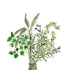 Herbs Bouquet , original watercolor painting, Parsley, Sage, Rosemary, thyme, Botanical painting, Kitchen art, wall decor, green