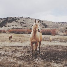Palomino by Kevin Russ All The Pretty Horses, Beautiful Horses, Animals Beautiful, Cute Animals, Beautiful Things, Horse Photography, Camping Photography, Palomino, Horse Love