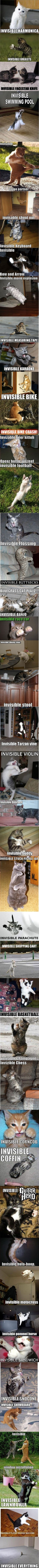 LMAO at the invisible world of cats