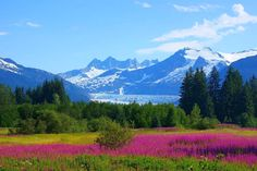 beautiful scenery | Beautiful Scenery, Beautiful, Flowers, Mountains, Picture, Scenery