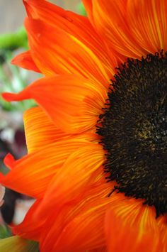 beautiful orange sunflower, one of my favorites Fleur Orange, Burnt Orange, Orange Orange, Blood Orange, Yellow, Orange Sunflowers, Orange You Glad, Orange Color, Colour