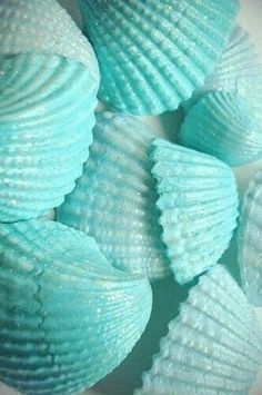 Teal and turquoise sea shells Bleu Turquoise, Shades Of Turquoise, Aqua Blue, Shades Of Blue, Blue Green, Light Blue Aesthetic, Aesthetic Colors, Color Cian, Everything Is Blue